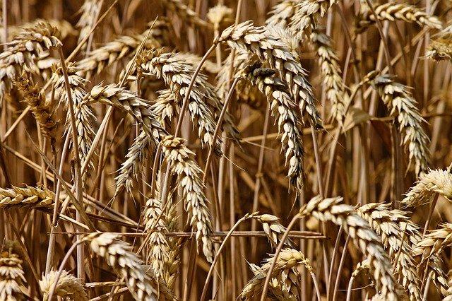 ARiMR: Producenci, którym zagraża utrata płynności finansowej w związku z COVID-19, mogą składać wnioski o pomoc do 30.11.2020 r.