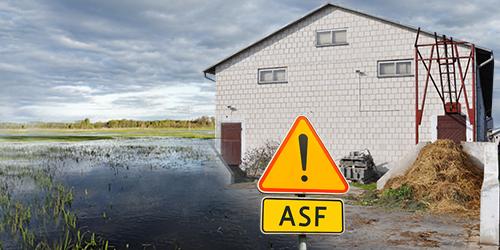Pierwsze przypadki wystąpienia ASF  na terenie powiatu zgorzeleckiego