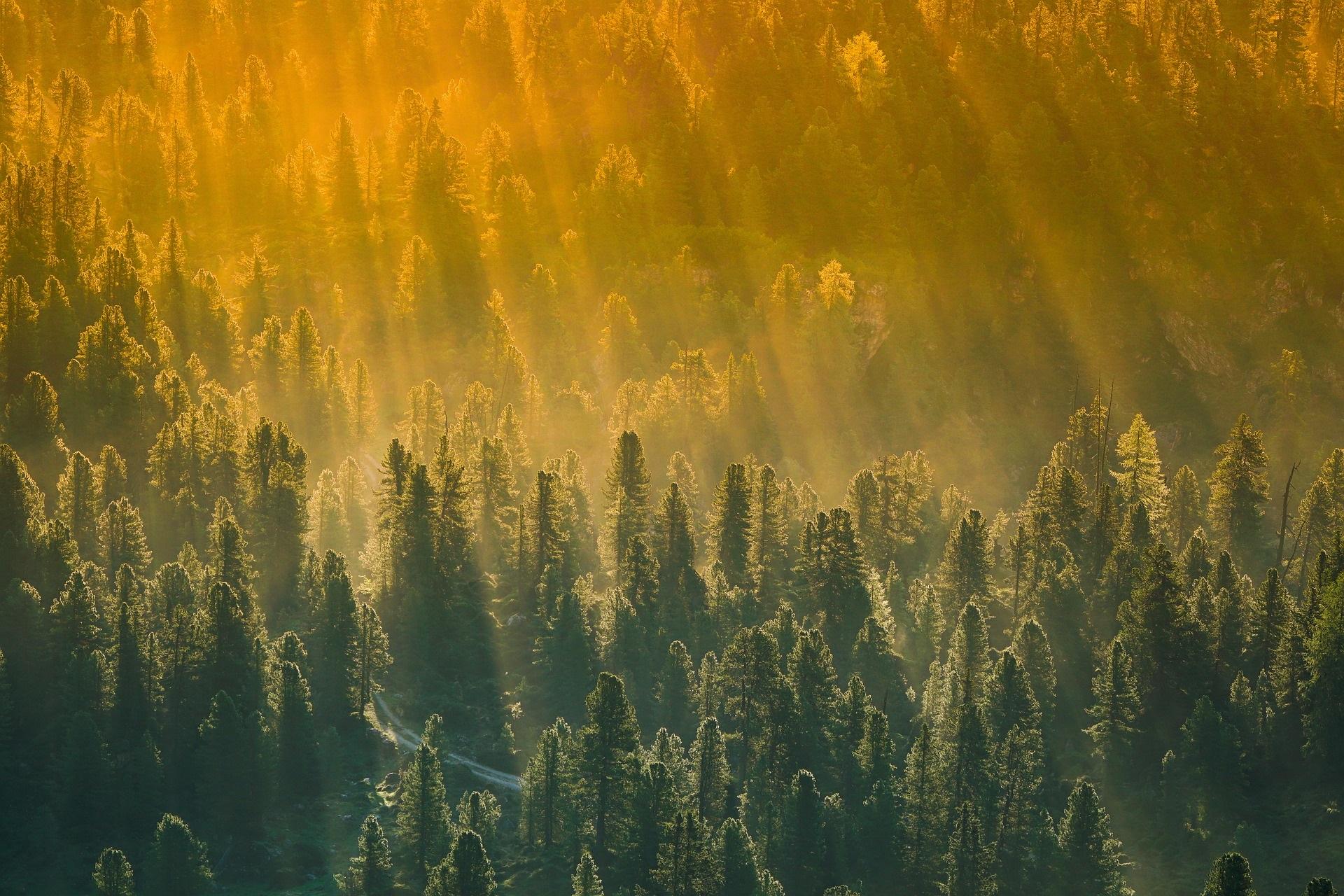 Słowo Wójta: Zielony ład – zielona gmina