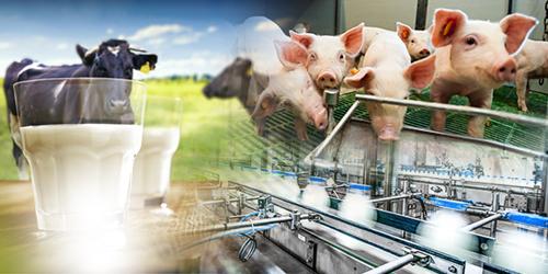 ARiMR: Modernizacja gospodarstw – pięć naborów wniosków w jednym terminie
