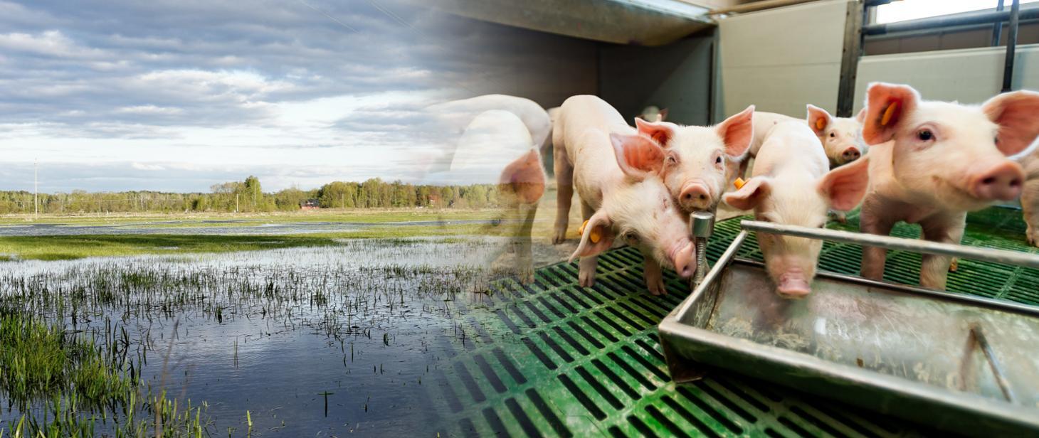 ARiMR: Inwestycje zapobiegające zniszczeniu potencjału produkcji rolnej – wkrótce rusza nabór